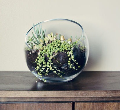 How-To-Terrarium (2)